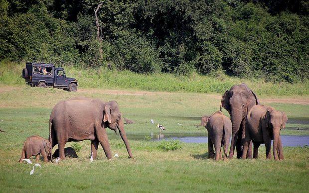 Les activités à privilégier lors d'un voyage touristique au Sri Lanka