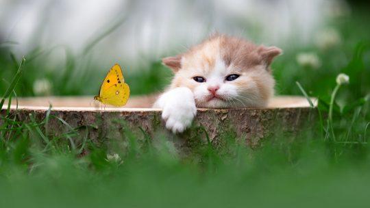 Arrivée de l'été : comment nourrir mon chat ?